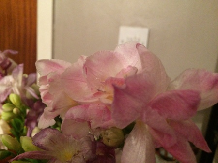 Pale pink fressia
